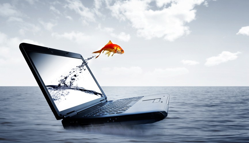 Goldfish jump out of the monitor at ocean